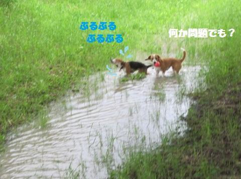 124_20110627075517.jpg