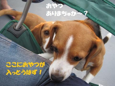 126_20110716074628.jpg