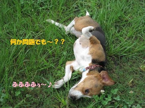135_20110627075516.jpg