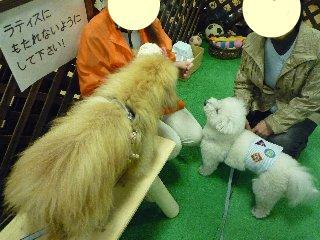snap_chibimaru0922_201120201142.jpg