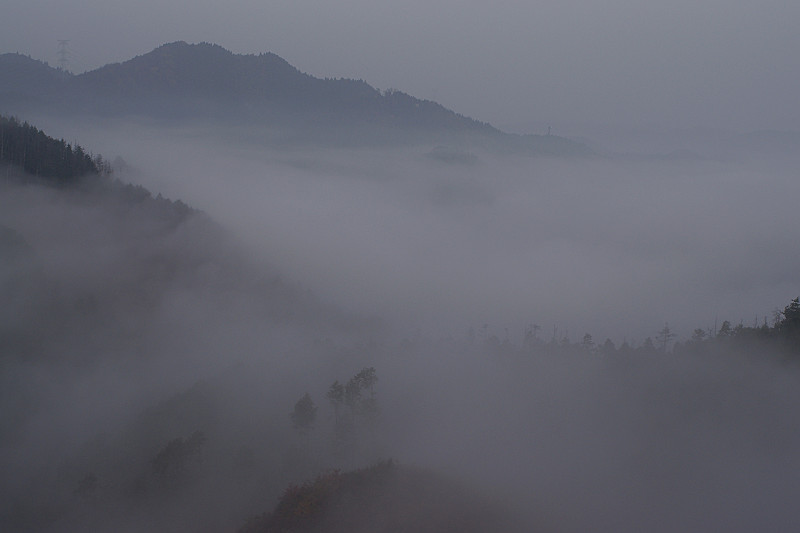 霧立ち込めて