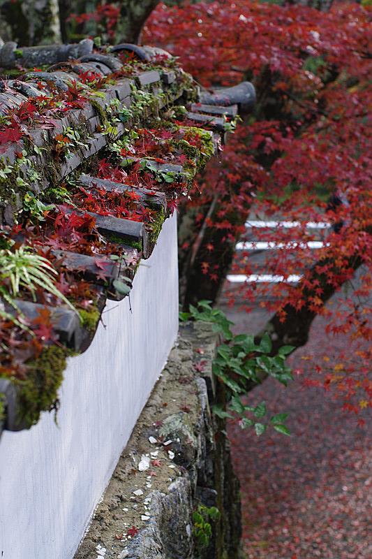 瓦に振り摘む赤い葉