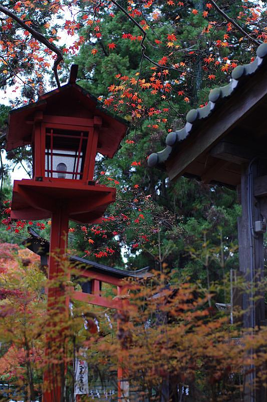 ハラハラと散る紅葉