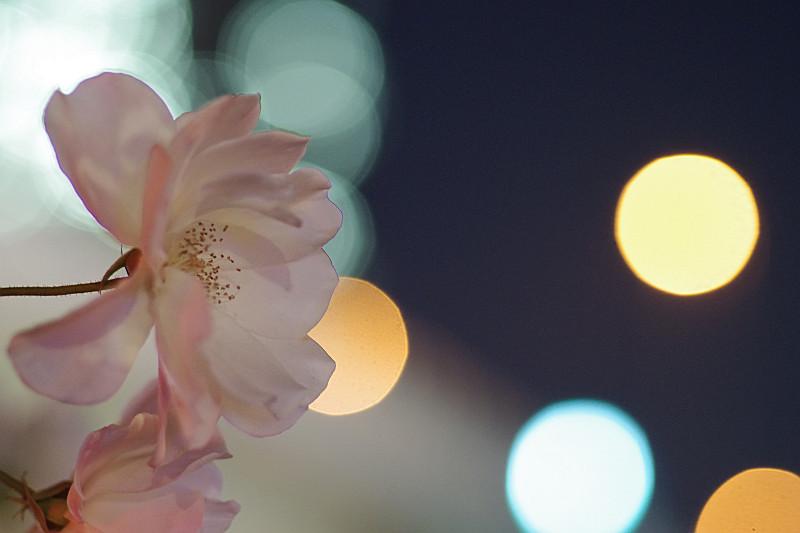 大ボケと季節はずれの花