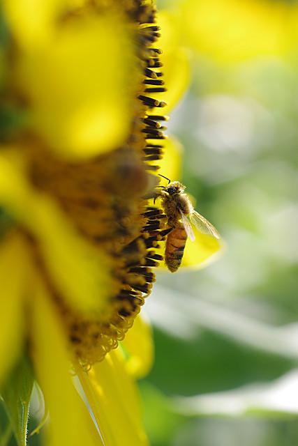 蜂ちゃん・大活躍
