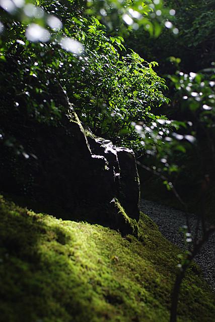 木漏れ日に光る