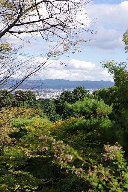 遠くに京都タワー