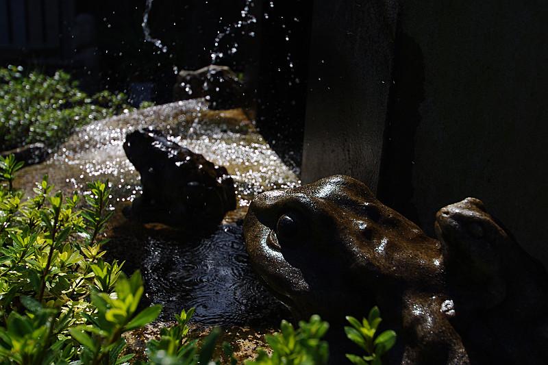 カエルの顔に水車のしぶき