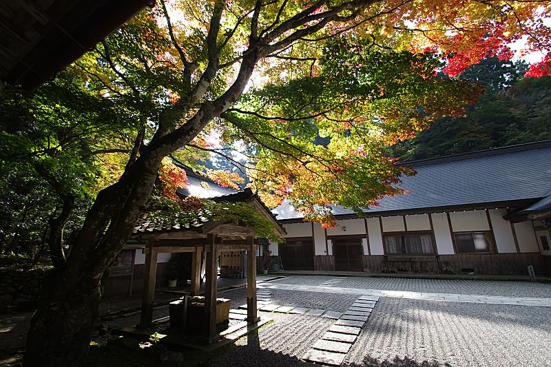 葉先から色づく