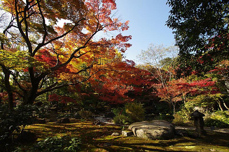 山荘の庭(秋)