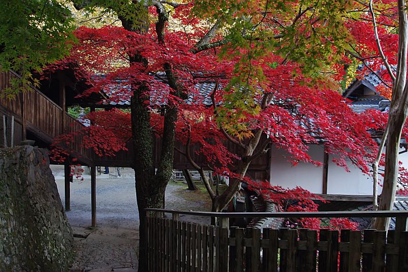 廊下と紅葉
