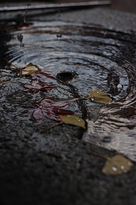 手水の落ち葉