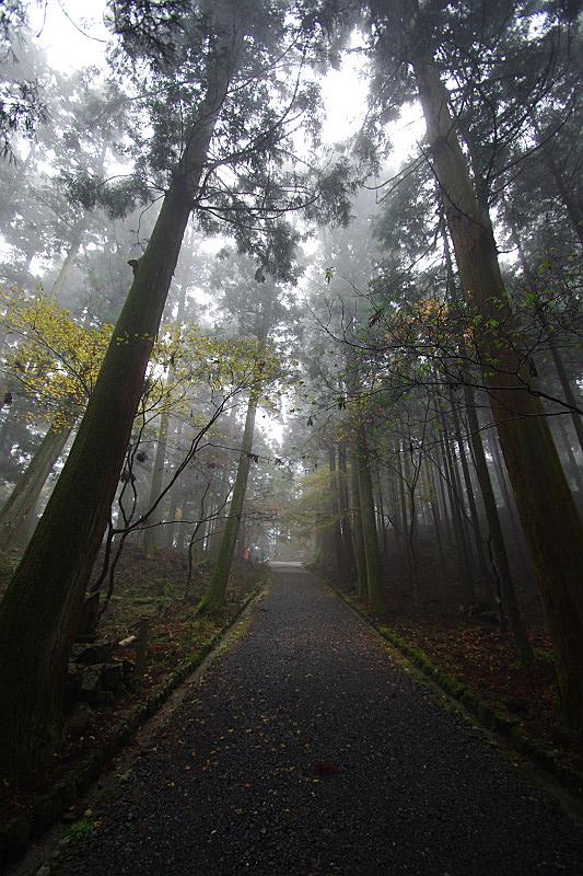 霧に煙る杉木立