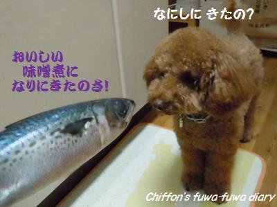 DSCN5100_convert_20131127215445.jpg