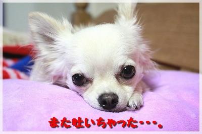 blog_import_4c8f616392ac0.jpg