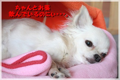 blog_import_4c8f616401406.jpg