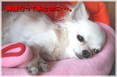 blog_import_4c8f6164b9351.jpg