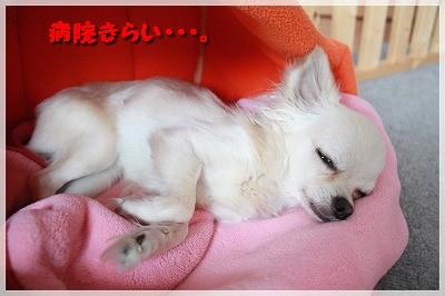 blog_import_4c8f61660a6a4.jpg