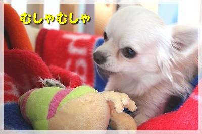 blog_import_4c8f6178670c6.jpg