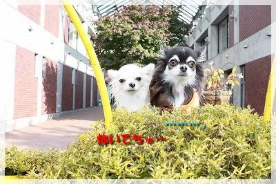 マル&エルモ