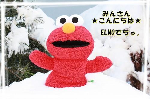 チワワ☆マル&エルモ-ELMO