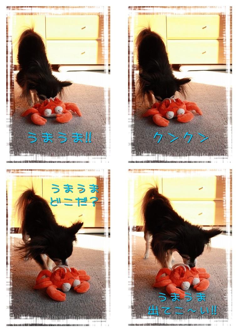 チワワ☆マル&エルモ-マル