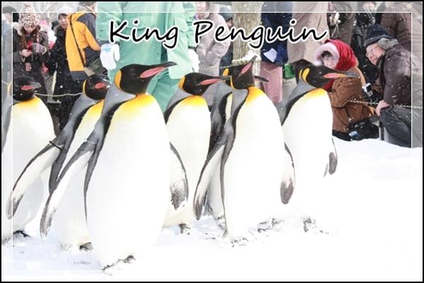 チワワ☆マル&エルモ-ペンギン