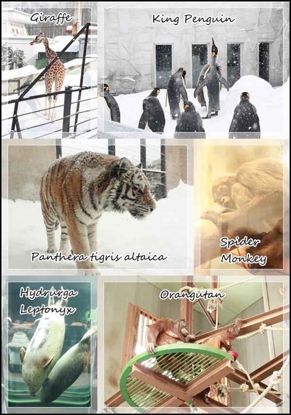 チワワ☆マル&エルモ-動物