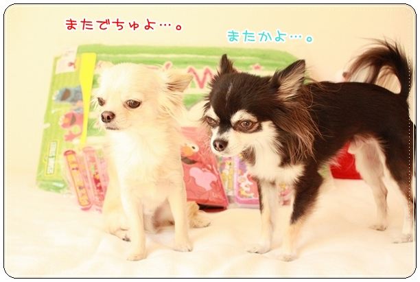 チワワ☆マル&エルモ-マル&エルモ