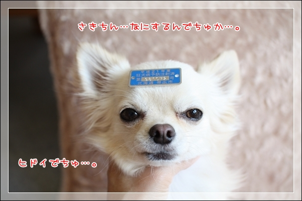 blog_import_4c8f706cf3cfb.jpg