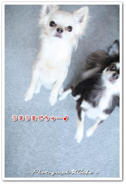 Photograph☆Cafe