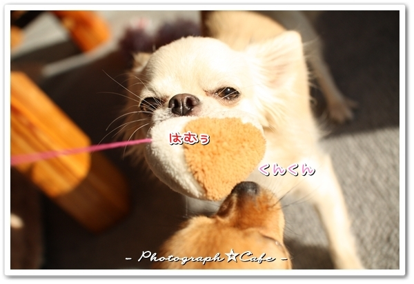 ruru☆photograph