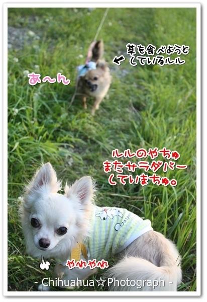 チワワ☆フォトグラフ