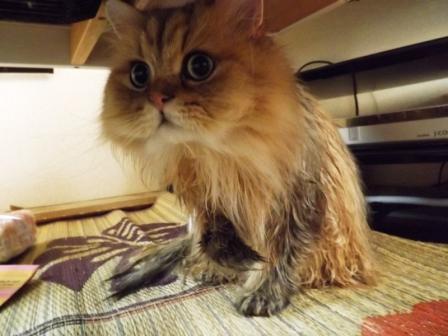 濡れレオン