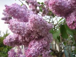 花がびっしりです♪