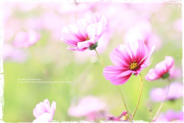 IMG_88-56.jpg