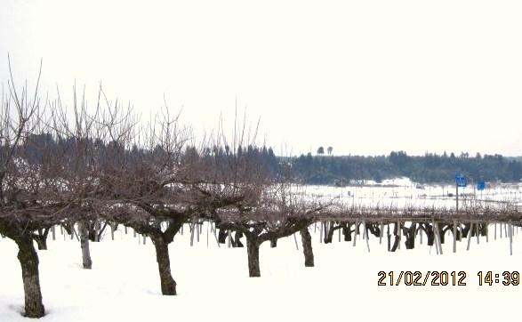 池多も雪多し