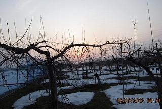 りんご園の日の出