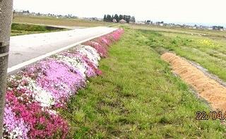 芝さくら採用