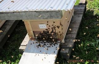 ハチさんも大働き