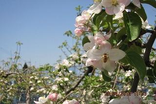 蜂さんありがとう