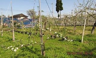我家とリンゴ園