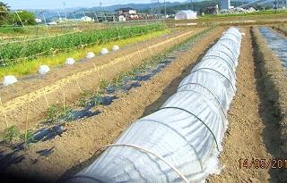 田品目栽培の畑