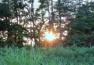 樹間に陽が沈む