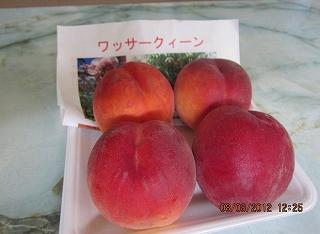 桃の新品種