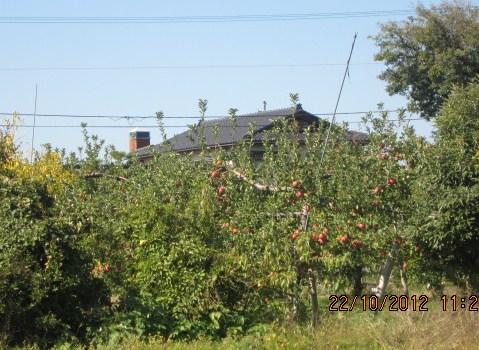 リンゴの実る家採用