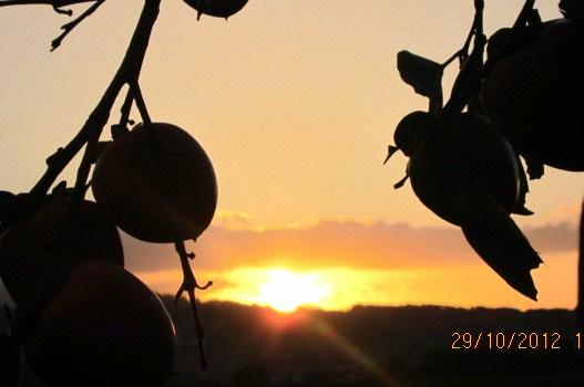 柿の実の間に陽は沈む