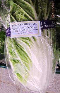 ミニ白菜のコメント