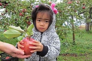 愛ちゃんりんご狩り