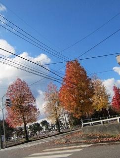 紅葉お街路